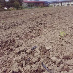 農業再生を考える