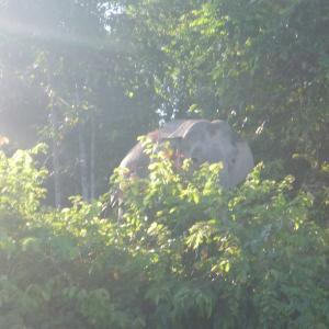 ボルネオ島 野生動物(ど素人)写真館 ~ジャングルで出会ったワイルドライフ~ Version②2018