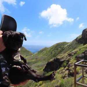 愛犬パグとダイヤモンドヘッド登頂