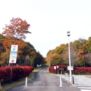 紅葉のようす 萩の里自然公園