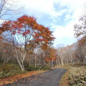秋から冬へ 萩の里自然公園