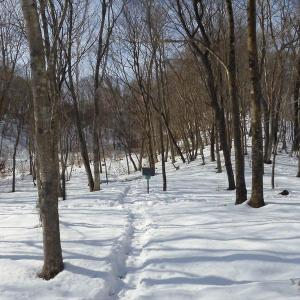 萩の里自然公園のゆかいな冬芽たち!