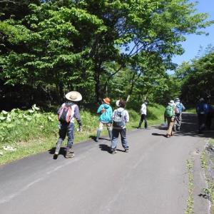初夏の里山自然散歩の様子