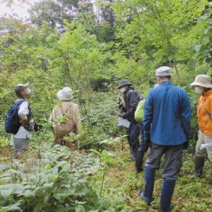 萩の里自然公園 夏の夏の里山自然散歩のようす