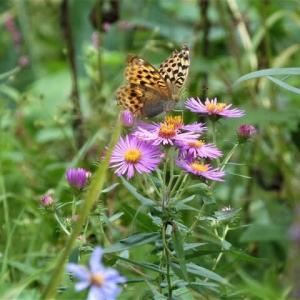 萩の里自然公園 秋の里山自然散歩 参加者募集