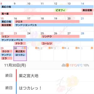 11月のプレイと購入品紹介