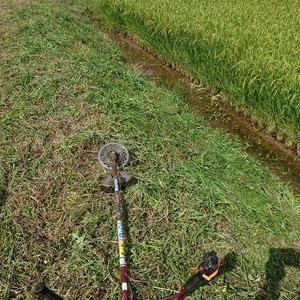 今日も草刈と電気工事