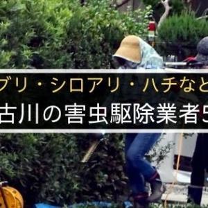 加古川の害虫駆除業者おすすめ5選!ゴキブリ・シロアリ・ハチなど撃退したい方必見