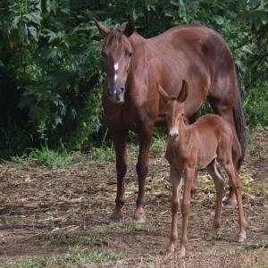 【ハーツクライ】種牡馬の特徴 芝の中長距離と渋った馬場が得意