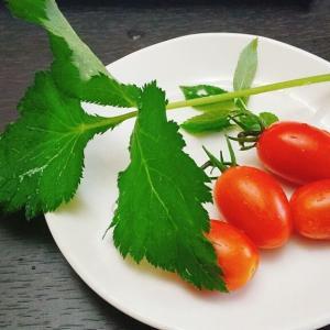 野菜代の節約、美味しいとれたて野菜