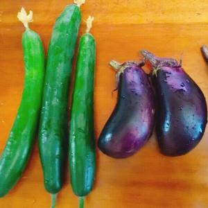 家庭菜園、ナスもキュウリも沢山とれたけど、トマトは連作障害?
