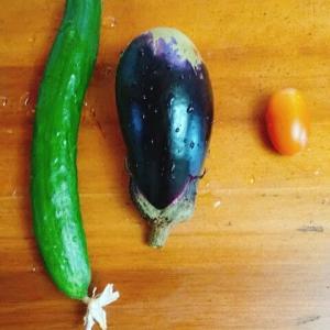 今日の収穫、家庭菜園で節約