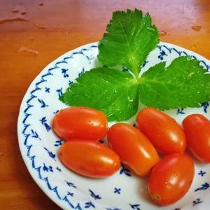 家庭菜園、甘いミニトマトで朝ごはん