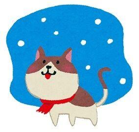 猫ちゃんの冬支度