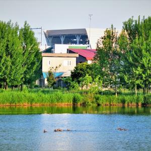 6月10日の弁当 / 我家前の「笹森池」で鳥撮りしたので、弁当は自宅広げた
