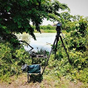 今日もカワセミ狙いで浪岡へ / 弁当はため池のポイントで待機しながら広げる