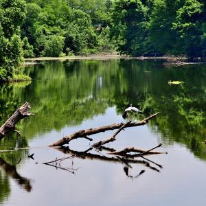 6月15日の弁当 / 鳥撮りは不調もため池近くにマイカー停めて広げる