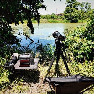 6月17日の弁当 / 鳥撮りには不作も弁当はため池の畔で広げた
