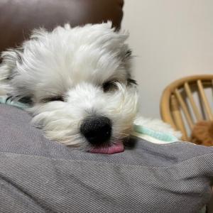 よく寝るよく寝る