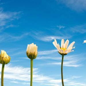 運気が上がる時や運気が変わる時の前兆とは?幸せが起こる前触れを知って開運!