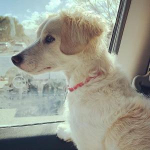 犬が車に乗るのを嫌がらないトレーニングの方法