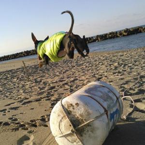 犬のかっこいい芸! 腕輪ジャンプを極める