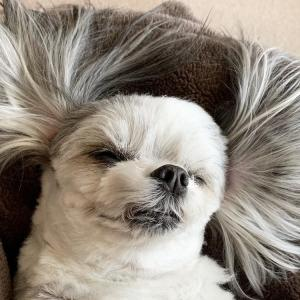 犬と一緒に寝ていいの?それともいけないの?