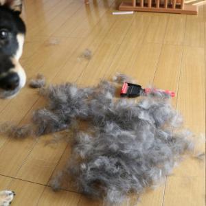 犬のブラッシングについて 短毛・中毛・長毛種