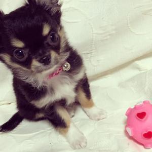 子犬の室内で遊べるおもちゃランキング