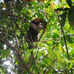 コスタリカ 3日目 コルコバド国立公園  トレッキング