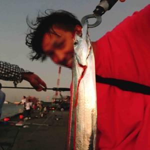 富津新港タチウオ:100均のジグで余裕だった