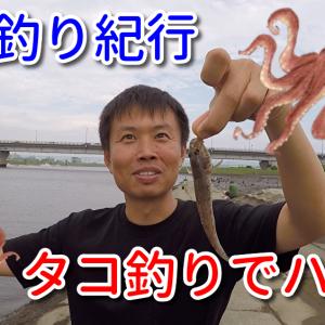 高洲海浜公園:タコ/江戸川 行徳橋:ハゼ15匹