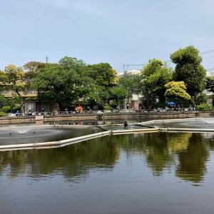 清水池公園(目黒区):ヘラブナ釣り