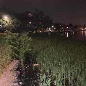 石神井公園:数年ぶりに軽く夜釣りをしてみた