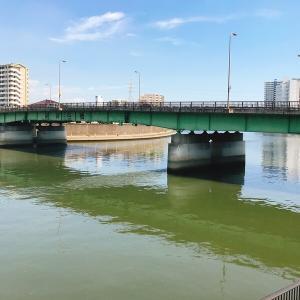 隅田川の新神谷橋でウナギを狙う