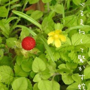 ヘビ苺とヘビ苺の花