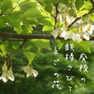 えごの花ラララララララコーラス団