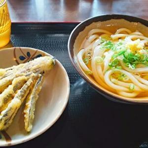 麺でぃ~ (さぬきうどん処 麺でぃ~)志度/創作うどんも豊富にそろう、さぬき市の人気店