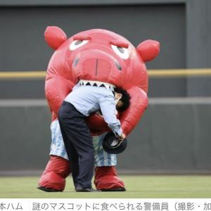 広島・牛?カバ?広島に謎のキャラクター登場 右翼ゾーン徘徊からの警備員パクリ