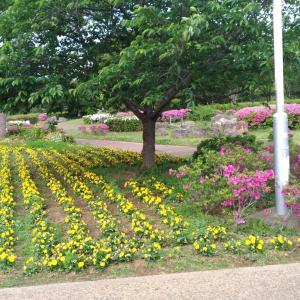 【5月初旬】袖ヶ浦公園にお花を見に行きました!(日常ぶろぐ)