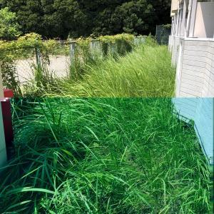 【2号物件】アパート周りの草刈りビフォーアフター