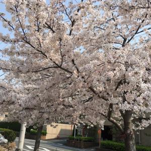 笹原公園へお散歩