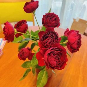 他人のふり見て、我がふり直せ~戻ってきた薔薇の花と家宝者