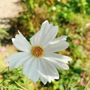花のように美しく、生き方は顔に現れると思うワタクシ。