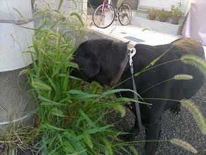 草食動物の愛犬ラッキー♪