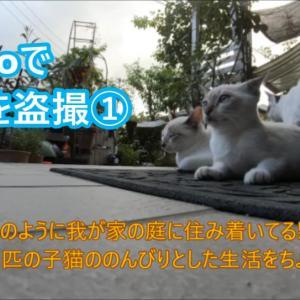 GoProで子猫を盗撮①