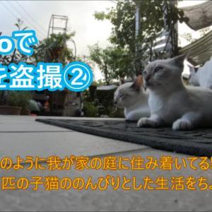 GoProで子猫を盗撮②