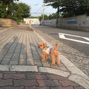 7月 16日の散歩