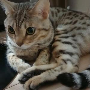 思わせぶりな猫