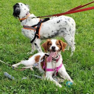 保護犬譲渡・・未来への懸念…
